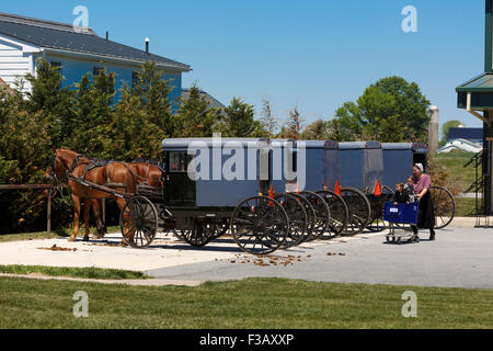 Amish woman pushing shopping cart with two children in it with a row of Amish horse and square carriages hitched - Stock Photo