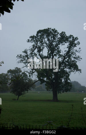 Two trees standing alone in a field with more trees on the horizon. It is a cloudy day. - Stock Photo