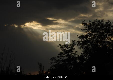 Sun rays pass trough stormy clouds above the trees canopy - Stock Photo