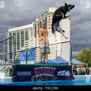 Las Vegas, Nevada, USA. 04th Oct, 2015. JODY EDMONSON and his Belgian Malinois mix, Boo Boo, compete during the - Stock Photo