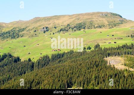 Alpine forest landscape. Photographed in Winnertal, Near Gerlos, Zillertal, Tirol, Austria - Stock Photo