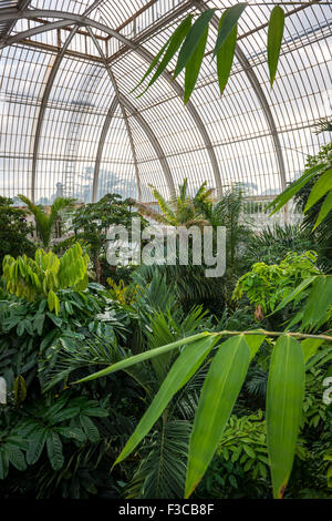 The interior of the Palm House at Kew Gardens, London, UK - Stock Photo