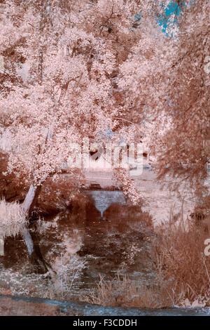 False Colour Infra Red Image taken in Bodnant Gardens - Stock Photo