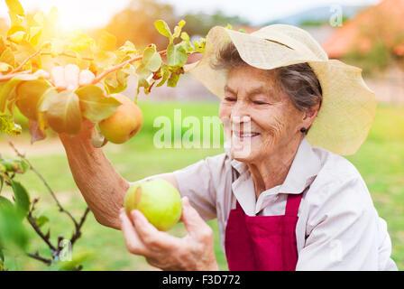 Senior woman in her garden - Stock Photo