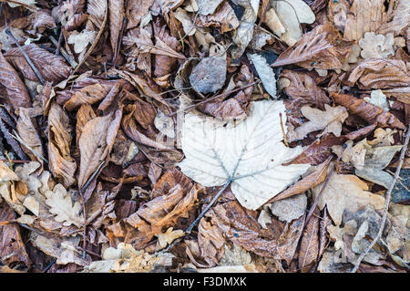 Dry foliage covered by rime, frosty fall background - Stock Photo