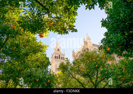 Spain, Andalusia, Seville, the Cathedral bell tower seen from the garden courtyard - Stock Photo