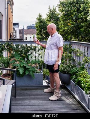 Senior man holding an aubergine grown in pot on balcony vegetable and herb garden - Stock Photo