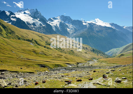 Stunning panorama landscape of snow capped mountains and green alp with cows,  French Alps, France, village Valfroide, - Stock Photo