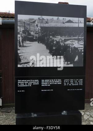 Photo taken SS showing prisoners going to gas chambers Auschwitz Birkenau Concentration Camp Oświęcim Poland murdered - Stock Photo