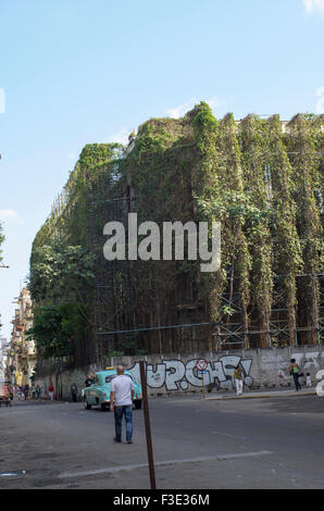 Man standing in front of a building completely covered with ivy and wines on a street corner in Havana, Republic of Cuba