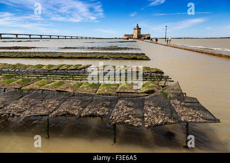 Oyster farming Fort Louvois island d'Oléron Pointe du Chapus Charente Maritime France Europe - Stock Photo