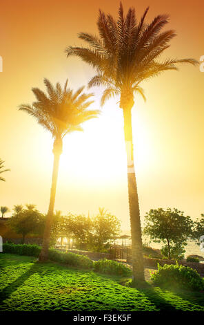 Tall palms in egyptian hotel at sunset - Stock Photo