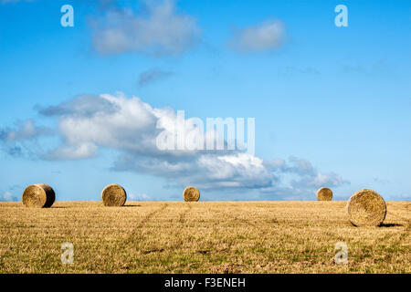 Round straw bales in a field of stubble after harvest, under a blue September sky, UK - Stock Photo