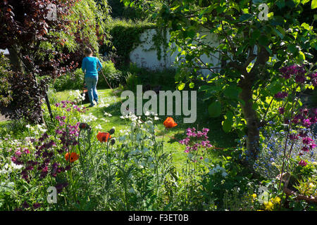 Elderly woman mowing lawn with electric mower, Wales, UK - Stock Photo