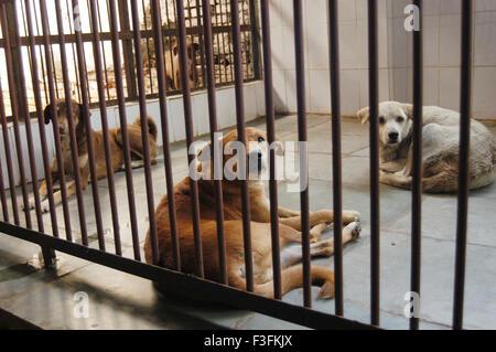 Welfare of Stray dogs ; a Bombay based NGO takes care of stray dogs in the city at Mahalaxmi Mumbai - Stock Photo