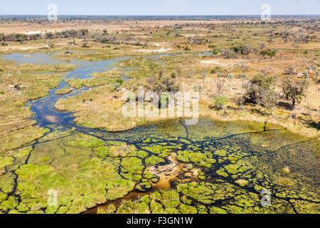 Safari landscape from the air: Aerial view over the Moremi Game Reserve and river channels, Okavango Delta, northern - Stock Photo