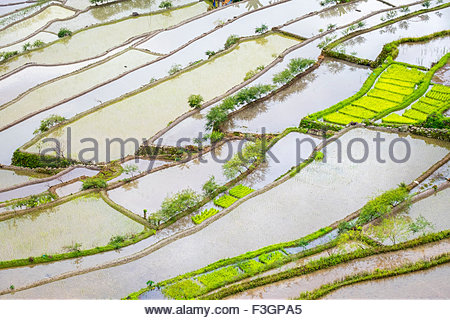Elevated view of flooded rice terraces during early spring planting season, Batad, Banaue, Mountain Province, Philippines - Stock Photo