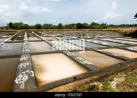 Salt meadow or saltpans at village Shiroda ; district Sindhudurga ; Maharashtra ; India - Stock Photo
