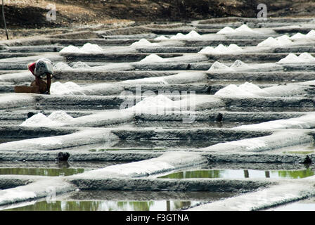 Salt meadow or saltpans at village Shiroda ; district Sindhudurga ; Maharashtra ; India - Stock Photo