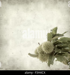 textured old paper background with sweet chestnut ripening on branches - Stock Photo