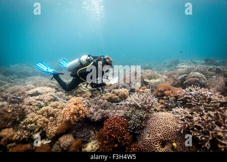 A scuba diver conducts a scientific survey on a coral reef, Raja Ampat, West Papua, Indonesia - Stock Photo