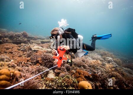 Female scuba diver conducts a scientific survey on a coral reef, Raja Ampat, West Papua, Indonesia - Stock Photo