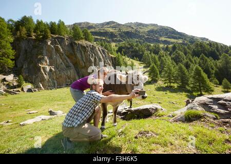 Young couple taking smartphone selfie with cow, Val Senales, South Tyrol, Italy - Stock Photo