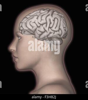 3D computer rendering of the human brain superimposed over the head of a woman - Stock Photo