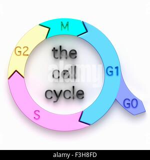 Illustration of the biological cell cycle - Stock Photo