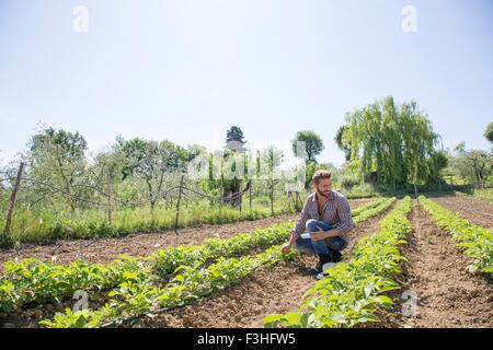 Young man crouched in field looking at tomato plants - Stock Photo