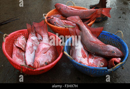 red snapper fish in the market - Stock Photo