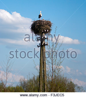 Stork Nest On Top Of Power Telephone Pole - Poland Europe - Stock Photo