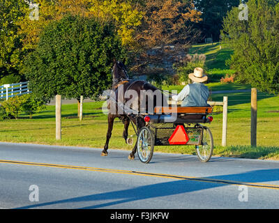 Amish Horse and Buggy on Country Road - Stock Photo
