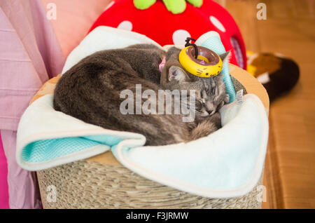 Cat resting at Happy Neko Cat Cafe in Shibuya, Tokyo, Japan with a kitten donut on its head - Stock Photo