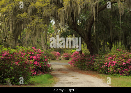 A colorful photograph of Bonaventure Cemetery in Savannah, Georgia. This is a public cemetery with beautiful scenery. - Stock Photo