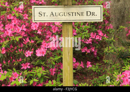 A colorful photograph of a sign saying 'St Augustine Drive' in Bonaventure Cemetery in Savannah, Georgia. - Stock Photo