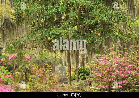 A colorful photograph of some gravestones in Bonaventure Cemetery in Savannah, Georgia. - Stock Photo