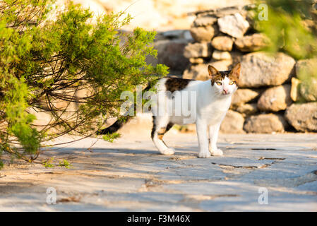 stray cat in a greek alley - Stock Photo