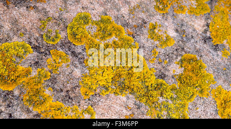 Texture of yellow and green lichen growing on sea stones - Stock Photo