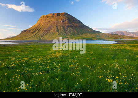 Buttercup meadow and Kirkjufell mountain, Grundarfjordur, Snaefellsnes Peninsula, Vesturland, Iceland. - Stock Photo
