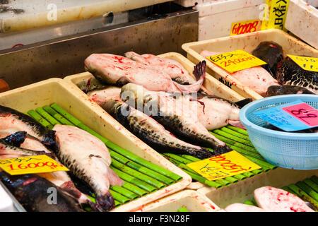 Japan, Osaka, Kuromon Ichiba Market, 'Osaka Kitchen'. Close up of three trays of fugu, puffer fish displayed on - Stock Photo