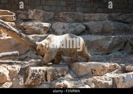 Haifa Zoo, Israel - Stock Photo