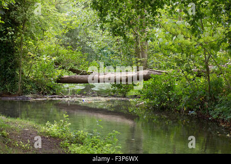 scenic landscape view of fallen tree trunk acting as a bridge over a lake / body of water - Stock Photo