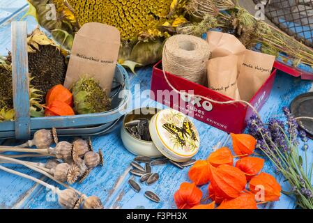 Potting bench still life showing the  collection saving and storing of seeds. - Stock Photo