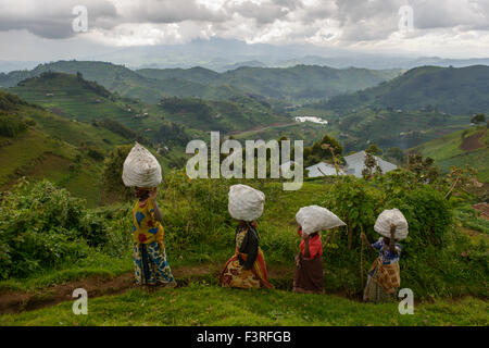 Women carrying potato sacks, Uganda, Africa - Stock Photo