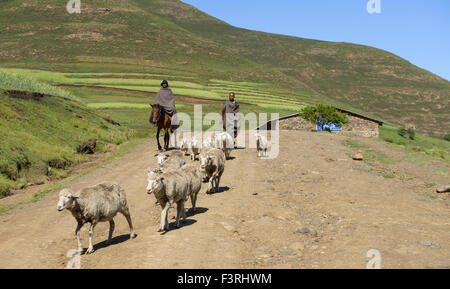 Shepherds in the province of KwaZulu Natal, South Africa - Stock Photo