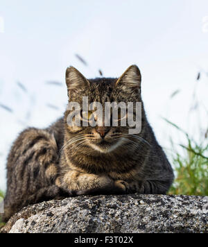Cat taking a rest on a stone rock - Stock Photo