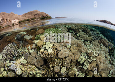 A beautiful coral reef grows near arid islands in Komodo National Park, Indonesia. This region has high marine biodiversity. - Stock Photo