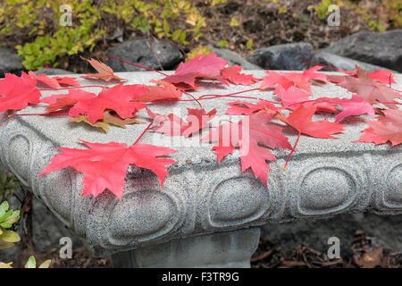 Red Maple Leaves Fallen on Concrete Stone Bench in Fall Season Closeup - Stock Photo