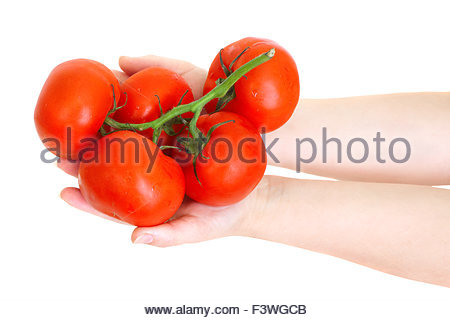 fresh tomatoes in the hands - Stock Photo